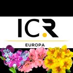 ICR EUROPA
